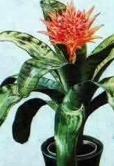 Четыре вида комнатных растений