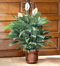 Популярные виды комнатных растений