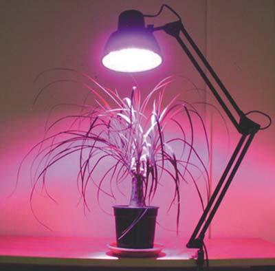 светодиодная фитолампа для растений купить в красноярске