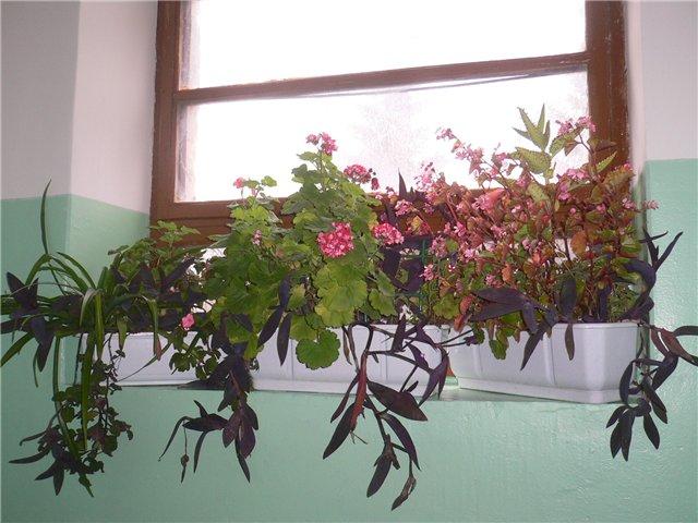 Цветы на лестничной площадке